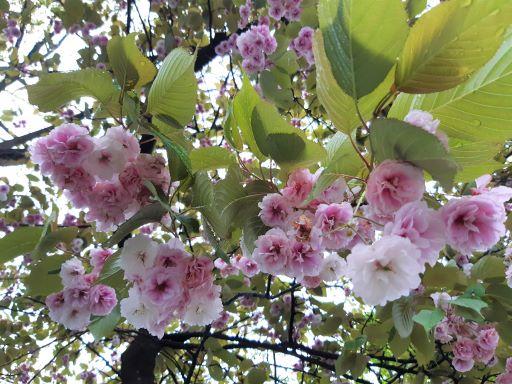 Kurschblütenzauber